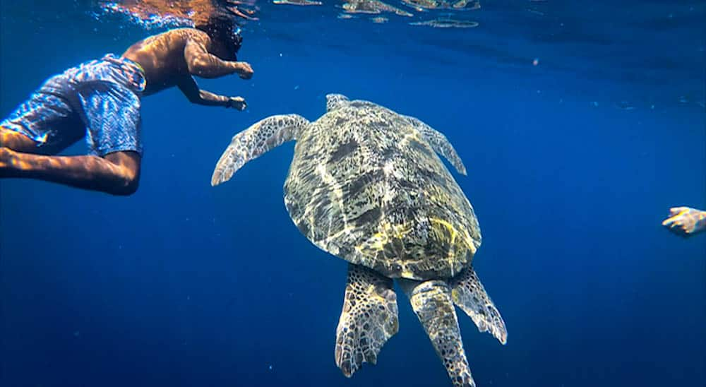 Snorkeling along turtles Gili T