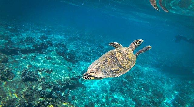 Snorkel next to turtles Gili T