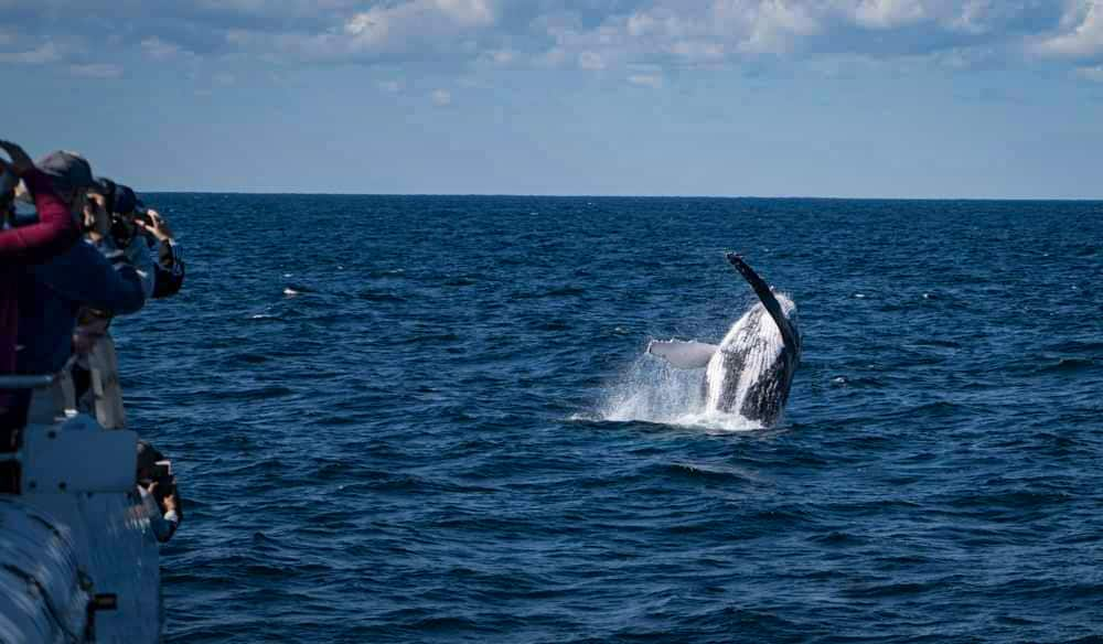 Whale watching cruise of the coast of Brisbane