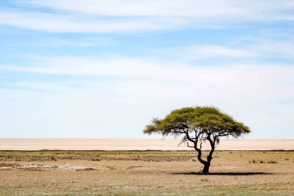 Etosha national park salt pan