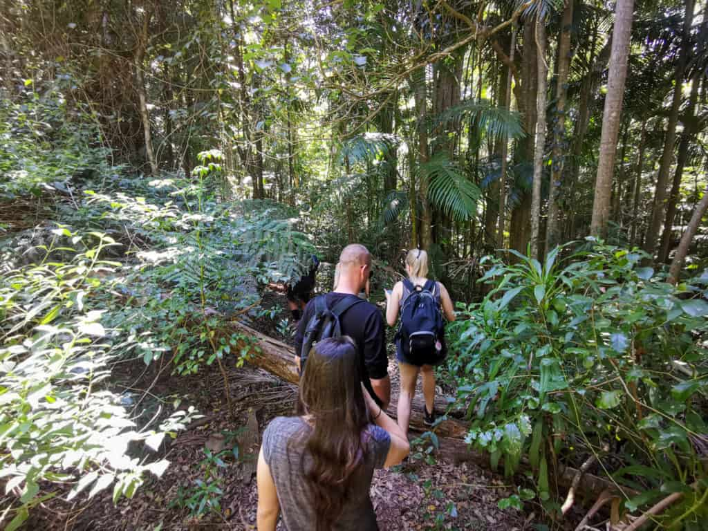 Bush walk in search of Piper comanche plane wreck