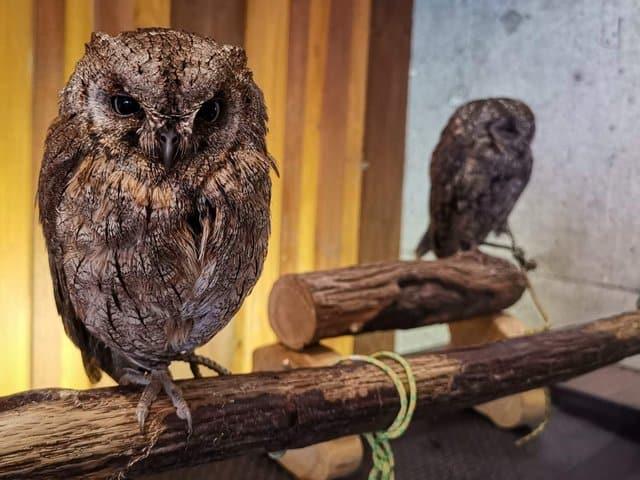 owl cafe osaka