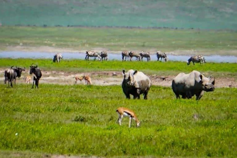 Rhino's in the Ngorongoro Crater in Tanzania.