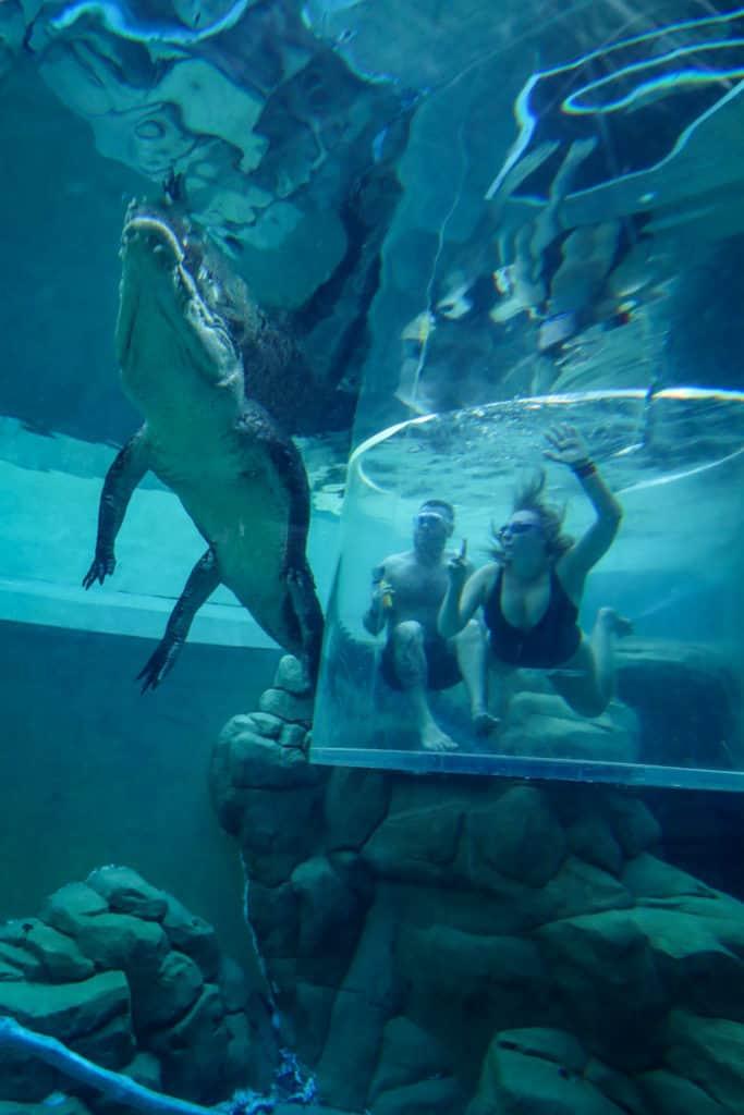Cage of Death - Crocodile swim