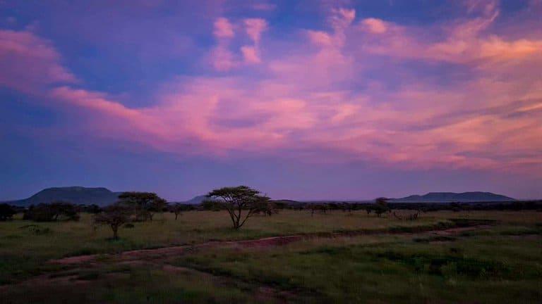 Serengeti sunrise at bush camp safari