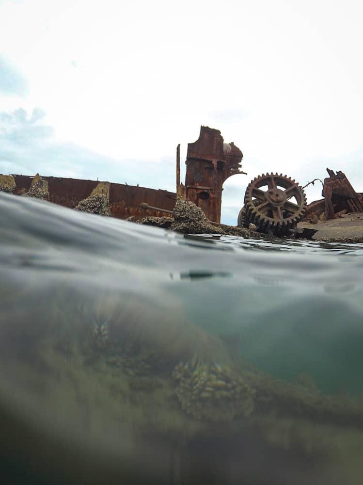 Tangalooma wrecks snorkeling
