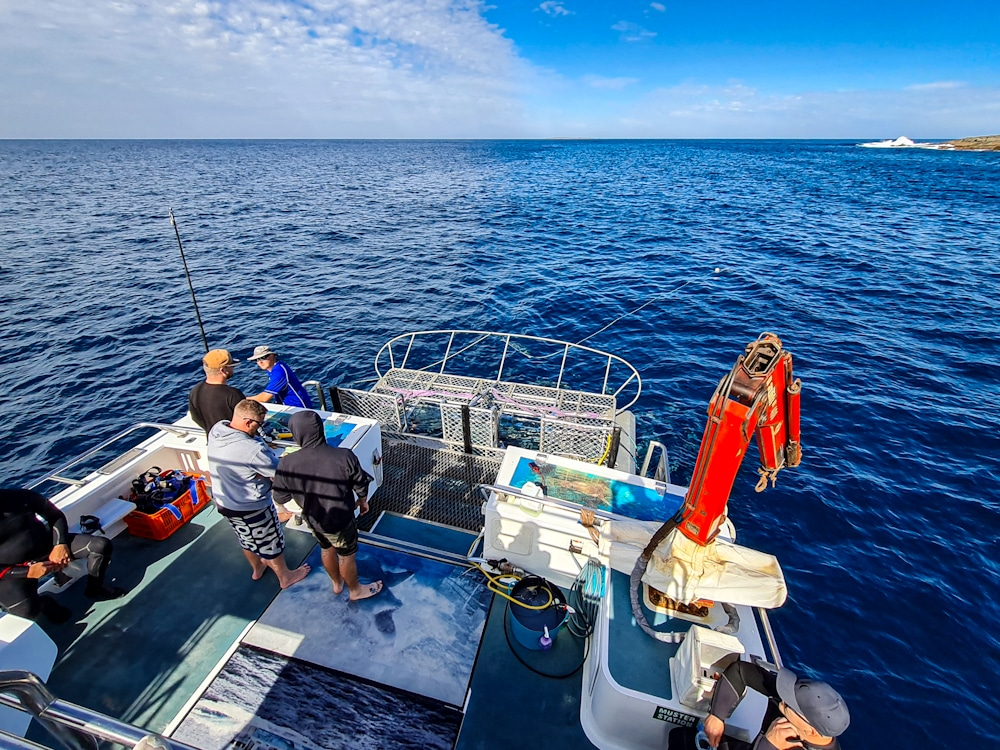 great white shark cage at Neptune Islands